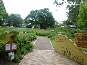 石ケ谷公園 (11)