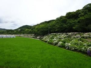 住吉荘から善楽寺 (24)