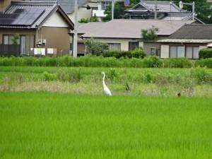 住吉荘から善楽寺 (27)