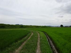 住吉荘から善楽寺 (34)