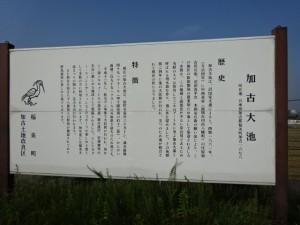 加古大池 (8)
