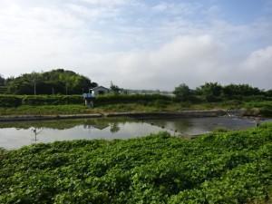 明石川 (16)