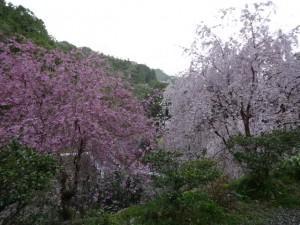 なべいわ荘 (2)