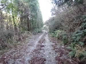 柿ノ木谷池 (17)