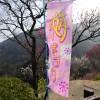 【愛媛県西条市】西条市市民の森 梅まつりに行ってみた!
